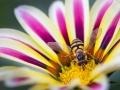 20101003-Flower_0441-web