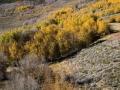 20061019_mono_126_Trees